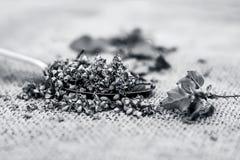 Tenuiflorum Ocimum, ιεροί σπόροι βασιλικού ` s σε ένα κουτάλι σε ένα gunny υπόβαθρο στοκ φωτογραφίες