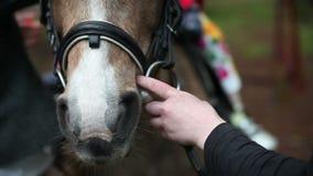 Tenuta del cavallo le redini stock footage