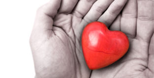 Tenuta del cuore Fotografia Stock