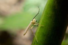 Tenuta dell'insetto sul ramo verde con la fine sulla vista dettagliata Fotografia Stock