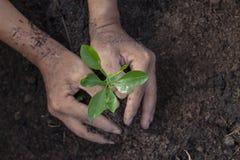 Tenuta della mano che semina in terra per piantare immagini stock