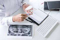 Tenuta della mano del dentista del modello della mandibola dei denti e della pulizia dentari con lo spazzolino da denti fotografia stock