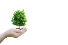 Tenuta umana delle mani di concetto di ecologia di doppia esposizione immagine stock libera da diritti