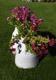 Teo white pots of beautiful pink color petunia flowers. Two white pots of beautiful pink color petunia flowers and green grass stock image
