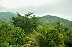 Teopical skog arkivbild