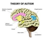 Teoria do autismo Fotografia de Stock