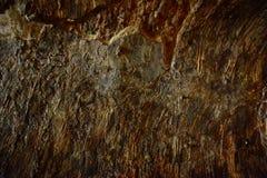 teotihuacan τοίχος ήλιων πυραμίδων του Μεξικού Στοκ Εικόνες