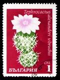 Tephrocactus-alexanderi, Kakteen serie, circa 1970 lizenzfreie stockfotografie