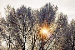 Tepid sunbeam passes through the branches of a tree covered by snow. During the cold winter Royalty Free Stock Photo