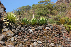 Tepoztlan Mexico Arkivbilder