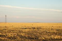 Teppe, prairie, plaine, veld Image stock