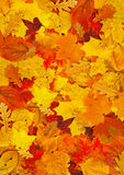 Teppich der Blätter Stockfotografie