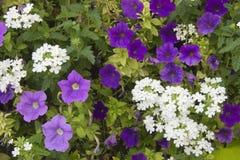 Teppich der Blumen Lizenzfreie Stockfotografie