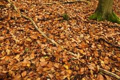 Teppich der Herbstblätter Stockbilder