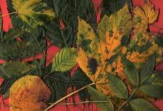 Teppich der toten Blätter. Stockbild