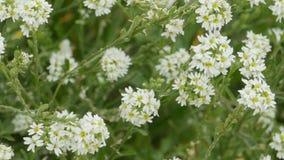 Teppich der wilden Blumen stock video footage