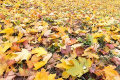 Teppich des bunten Herbstlaubs stockbild