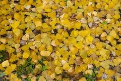 Teppich des Herbstlaubs im Waldboden stockfoto