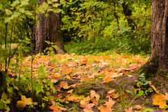 Teppich vom Herbstlaub Stockfoto