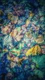 Teppich von Blättern Stockfoto
