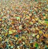 Teppich von Grünen und Orangenblättern Lizenzfreie Stockbilder