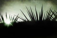 Tequila Μεξικό Lanscape στοκ εικόνες με δικαίωμα ελεύθερης χρήσης