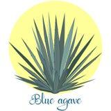 Tequila agawa lub błękitna agawa wektoru ilustracja ilustracja wektor