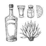 Tequila bottle, blue agave, salt shaker and shot glass with lime. Mexican alcohol drink vector drawing. Sketch of shot glass cocktail with citrus fruit slice stock illustration