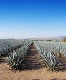 Tequila de paysage photographie stock