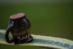 Tequila del agavo en la forma del purista fotografía de archivo