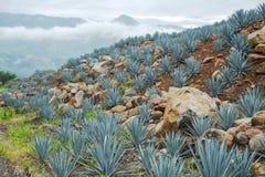 Tequila krajobraz Fotografia Stock