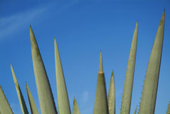 Tequila krajobraz Zdjęcia Stock