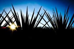 Tequila Landscape Stock Images