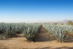 Tequila México de Lanscape imagenes de archivo