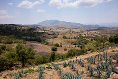 Tequila, Mexique photos stock