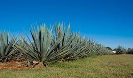 Tequila Mexique de Lanscape photographie stock