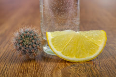 Tequila shot with lemon Stock Image