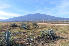 Tequila Volcano and Agave Fields Royalty Free Stock Image