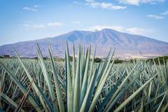 Tequilalandschap