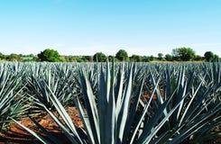 Tequilalandskap arkivbild