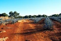 Tequilalandskap arkivbilder