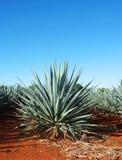 Tequilalandskap royaltyfri fotografi
