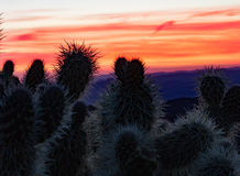 Tequilla sunrise. Colorful sunrise as a background to cactus in foreground Stock Photo