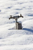 Ter faucet in snow. Stock Photo