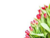 Teraźniejsza karta z tulipanowym kwiatu kąta szablonem Obrazy Royalty Free