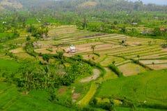 Teraced米领域在东南亚 免版税图库摄影