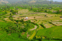 Teraced Rice Fields in Southeast Asia Royalty Free Stock Photography