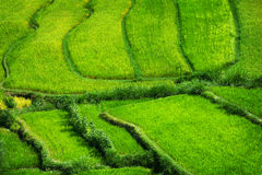 Teraced Rice Fields Stepping Down from the Hillside in Asia. Bright green and healthy rice stalks grow from these stepped rice teraces in Southeast Asia Royalty Free Stock Image