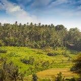 Teraced risfält på en backekoloni i Asien Royaltyfria Foton