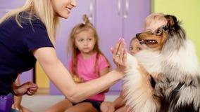 Terapeut och hennes hund som har ett möte arkivfilmer